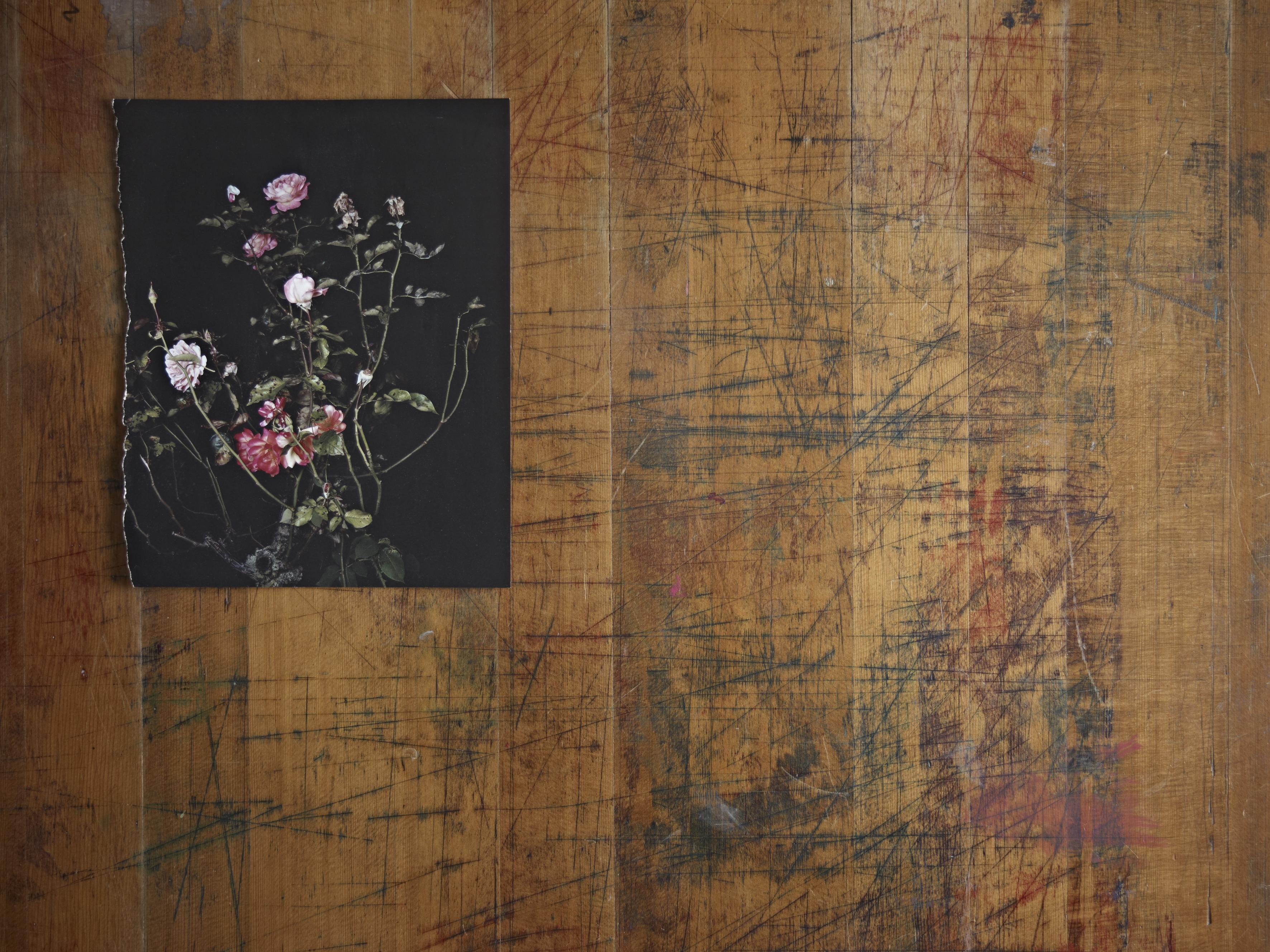 Still Life (Rose) detail*