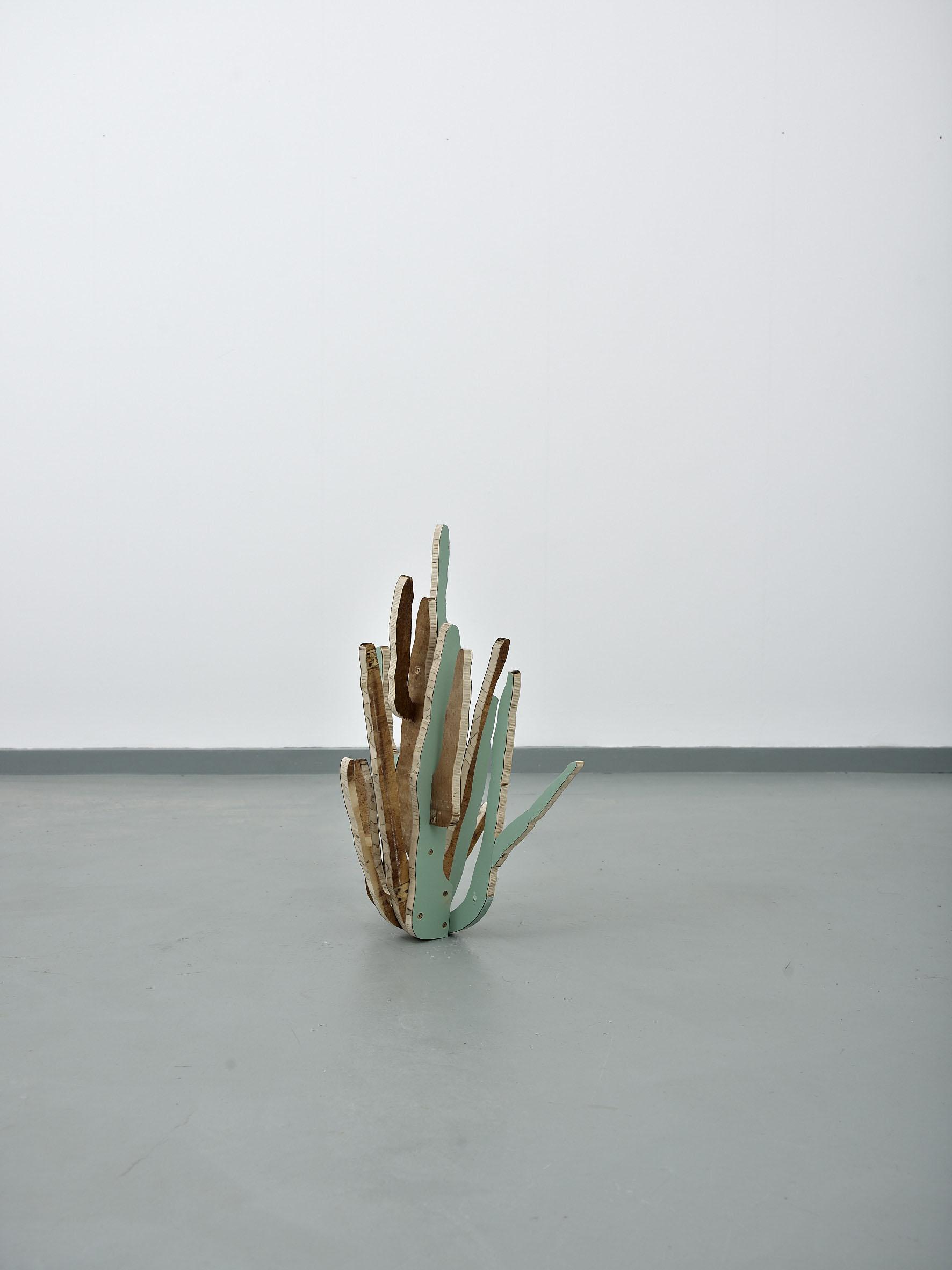 Cactus(OrganPipe)2014****